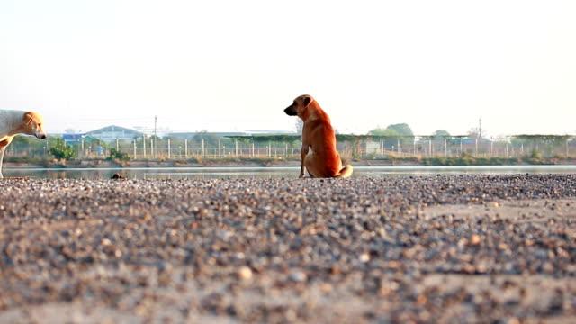 dog - stray animal stock videos & royalty-free footage