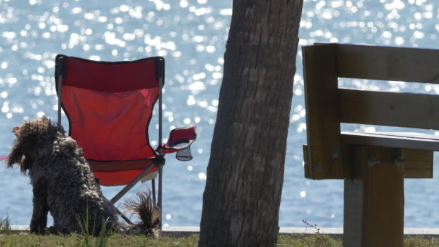 dog waiting at beach - dog blinking stock videos & royalty-free footage
