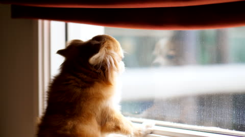 dog waiting for owner - waiting stock videos & royalty-free footage