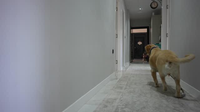 hund wartet auf spaziergang - haustierleine stock-videos und b-roll-filmmaterial