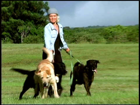 dog walker running with dogs in field - vier tiere stock-videos und b-roll-filmmaterial