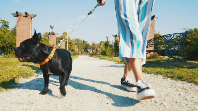 dog walker. - dog walker stock videos and b-roll footage