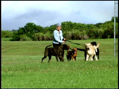 dog walker with dogs in field - 犬の散歩点の映像素材/bロール