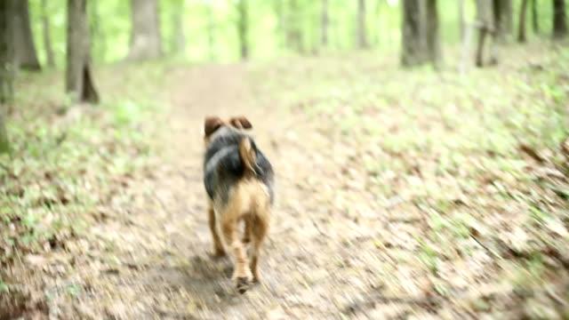vídeos y material grabado en eventos de stock de perro pasos de distancia - paso largo