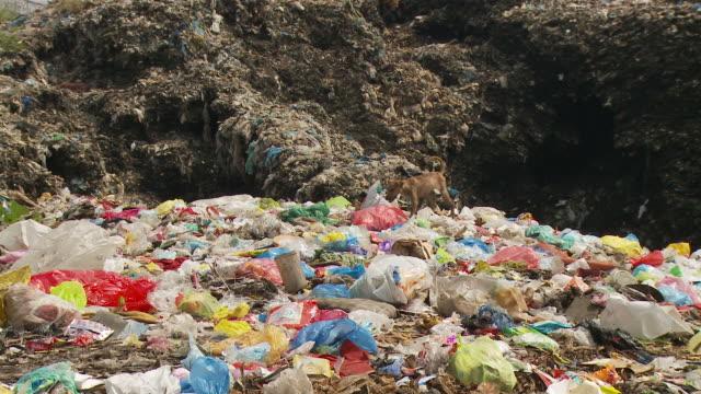 Dog walking in garbage dump in Manila Philippines