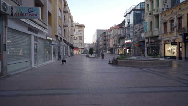 dog walking on the empty streets - town stock videos & royalty-free footage