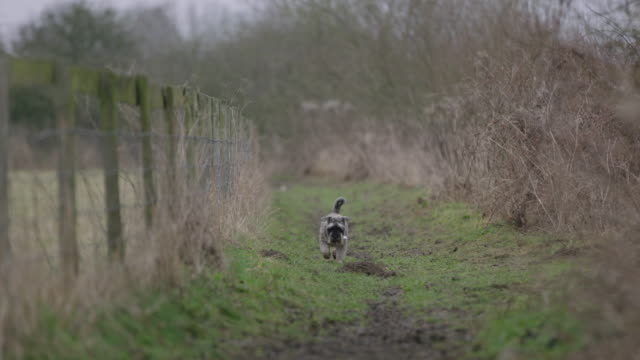 dog walking to camera - oxfordshire stock videos & royalty-free footage