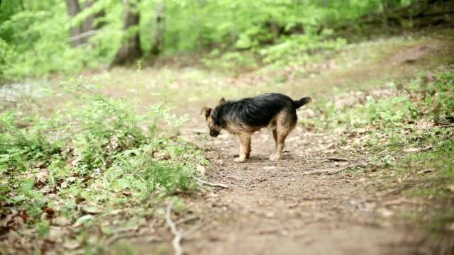 Cão a andar de um trilho