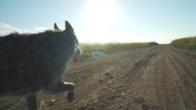 vídeos de stock e filmes b-roll de dog walks along dirt road - trilho