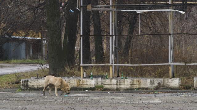 dog walks under asbest town crest and sign, tilt up - asbest stock-videos und b-roll-filmmaterial