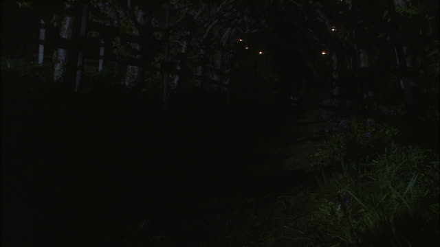a dog wanders down a path at night. - exeter england stock videos & royalty-free footage