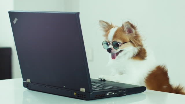 dog wearing glasses looking at laptop - genius stock videos & royalty-free footage