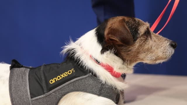 A dog wears a vest containing an anaxeos sensor at the Sense of Intelligence Oy Ltd stand during day two of the Mobile World Congress in Barcelona...