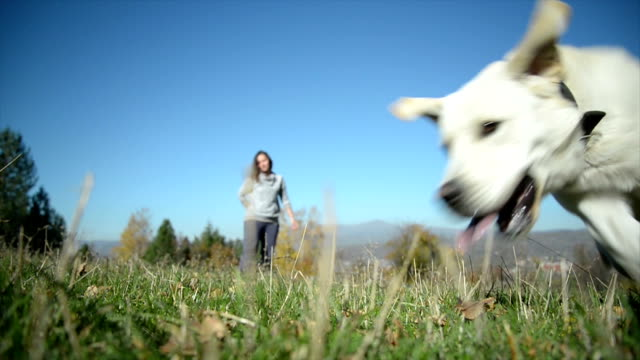 Cane e il suo proprietario