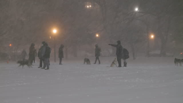 dogs and their owners mingle and play amidst a snowstorm in mccarren park in greenpoint, brooklyn on december 16 in new york city. a nor'easter... - pet owner stock videos & royalty-free footage
