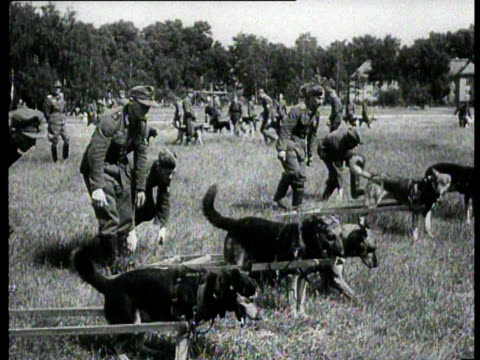 stockvideo's en b-roll-footage met dogs are trained to be able to transport injured soldiers from the battlefront - slagfront
