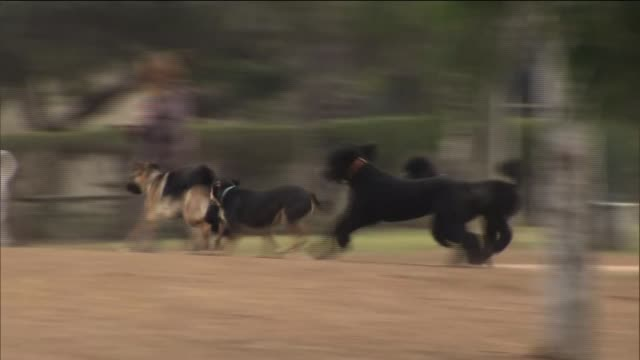dogs at a dog park on december 19 2013 in costa mesa california - off leash dog park stock videos & royalty-free footage