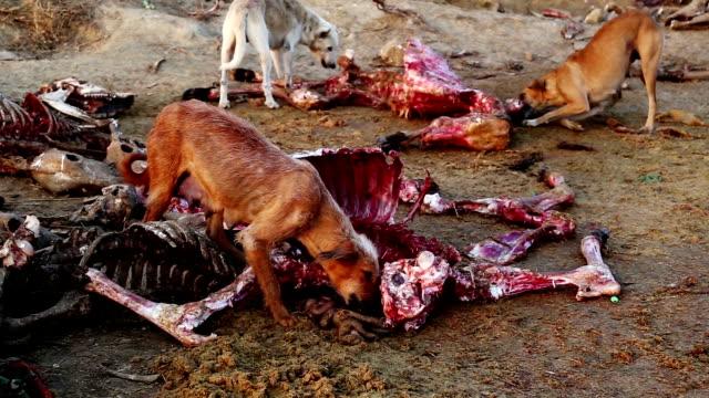 vídeos y material grabado en eventos de stock de perros la alimentación animal muerto - perro cazador
