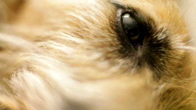 Perro's eye close up