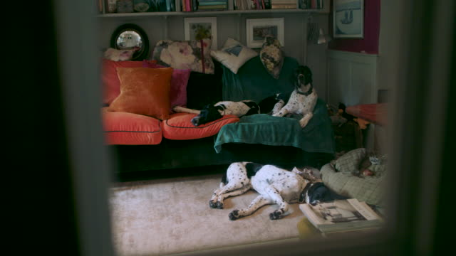 dogs in living room - wohnraum stock-videos und b-roll-filmmaterial