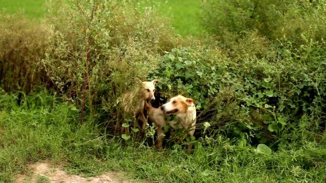 dogs in the nature - animal family stock videos and b-roll footage