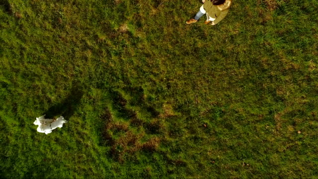 公園で犬 - ペット点の映像素材/bロール