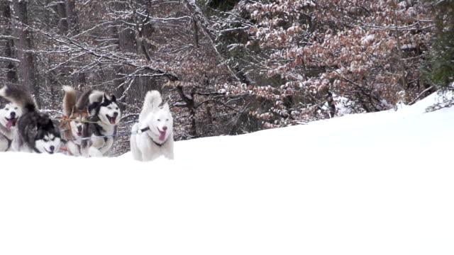 Hunde im winter Landschaft
