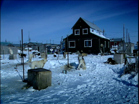dogs loiter outside houses in eskimo village alaska - inuit stock videos and b-roll footage