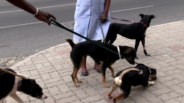 dogs on leash, mindelo, cape verde, sao vicente island - 四匹点の映像素材/bロール