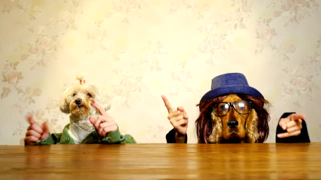 dog's party - oggetto creato dall'uomo video stock e b–roll