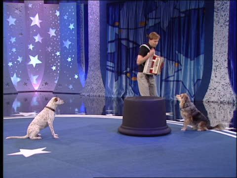 dogs perform tricks for an animal trainer that holds an accordion. - performing tricks stock videos & royalty-free footage