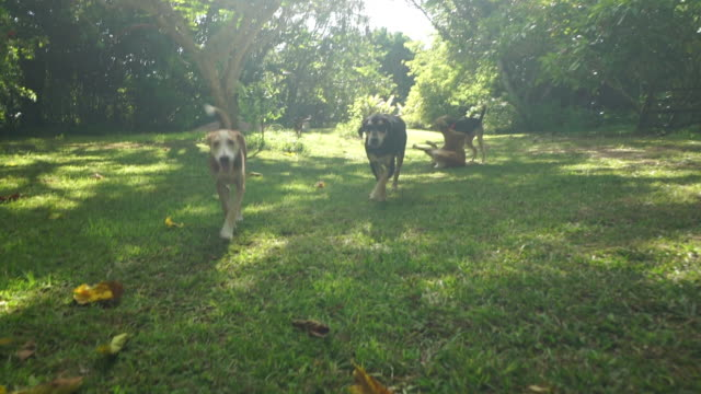 dogs playing in garden