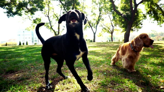 dogs playing in park - three animals stock videos & royalty-free footage