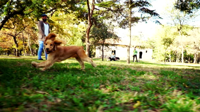 dogs playing in park - beard stock videos & royalty-free footage