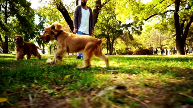 dogs playing in park - pets stock videos & royalty-free footage