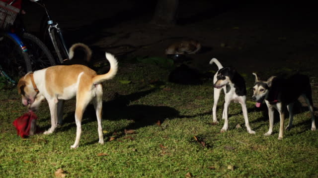 dogs playing in the garden at night