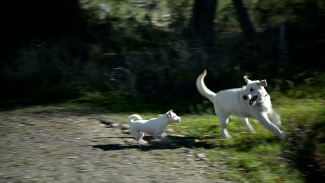 hunde spielen - two animals stock-videos und b-roll-filmmaterial