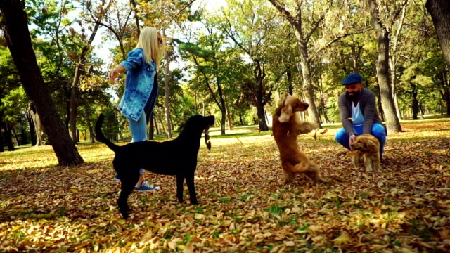 dogs playing with their owners in autumn leaves - piccolo gruppo di animali video stock e b–roll