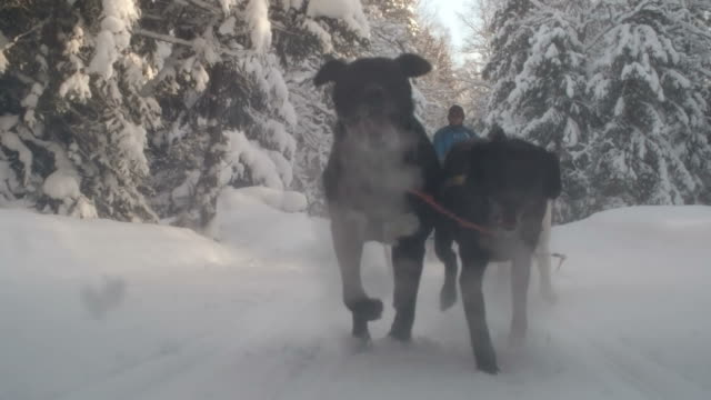 Dogs pulling a sled through snowy forest