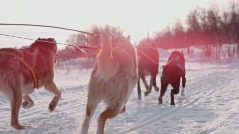 vidéos et rushes de slo mo chiens tirant un traîneau dans la neige - chien de traîneau