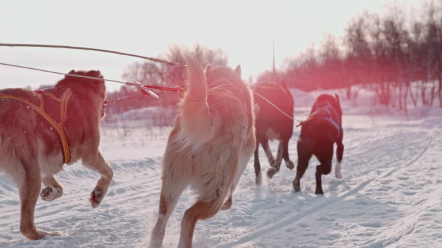 slo mo dogs pulling a sled through the snow - positive emotion stock videos & royalty-free footage