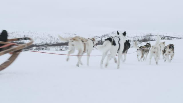 vidéos et rushes de pan la chiens tirant des gens assis sur un traîneau - chien de traîneau