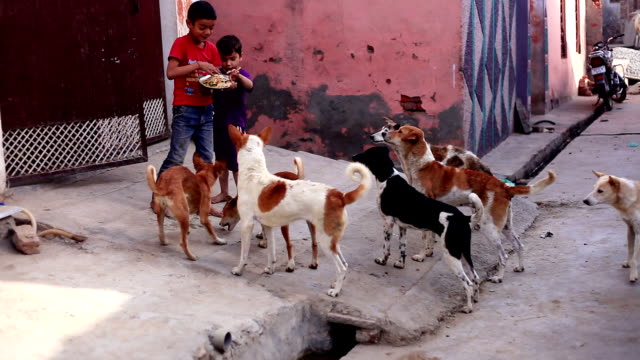 dogs & puppies waiting for bread - comportamento animale video stock e b–roll