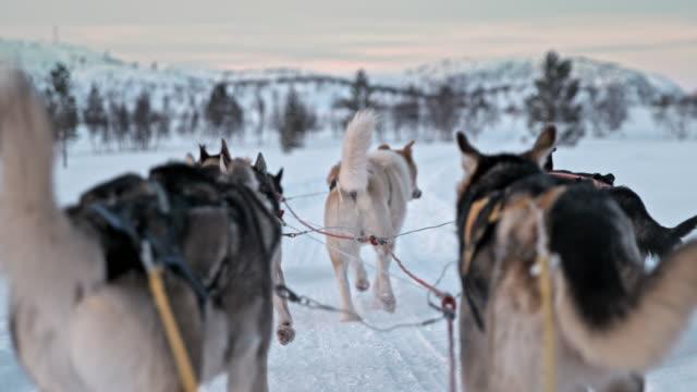 SLO MO POV Dogs racing across the snow