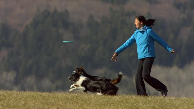 dogs running after plastic disk - one mid adult woman only stock videos & royalty-free footage