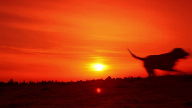 Dogs running in the sunset.
