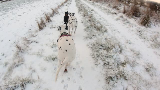dogs running through the snow - dalmatian dog stock videos and b-roll footage
