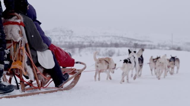 slo mo dogs sledding through the snow - sled dog stock videos & royalty-free footage