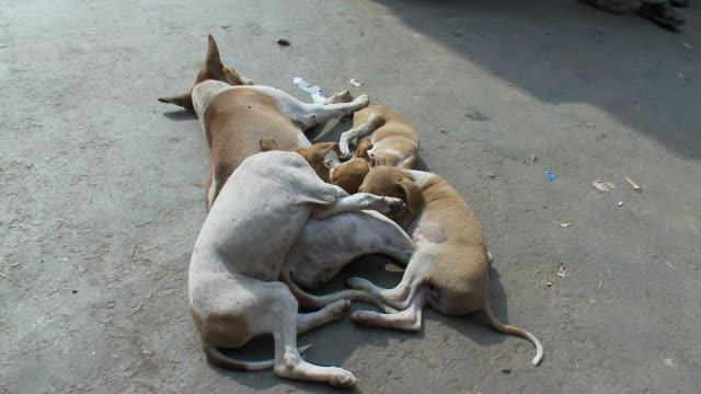 Dogs sleep in a huddle on a busy street.