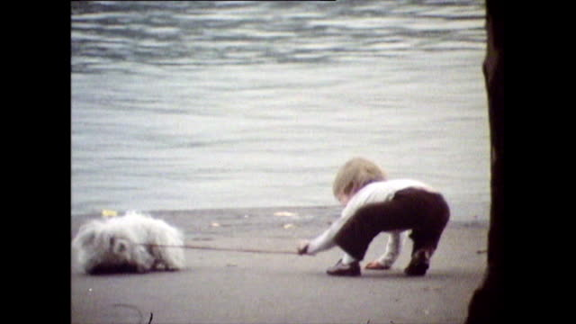 dogs taking advantage while being walked in hyde park; 1971 - lakeshore stock videos & royalty-free footage
